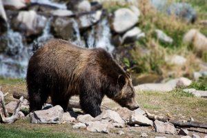 senda del oso