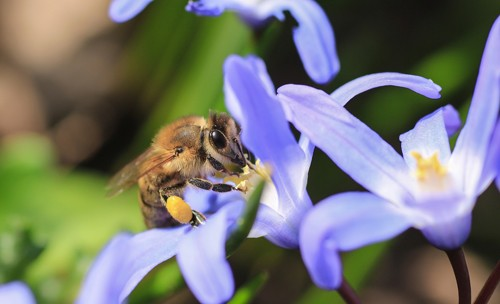 Feria de la Miel en Aller