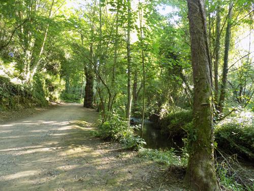 Ruta Carbayera Tragamón